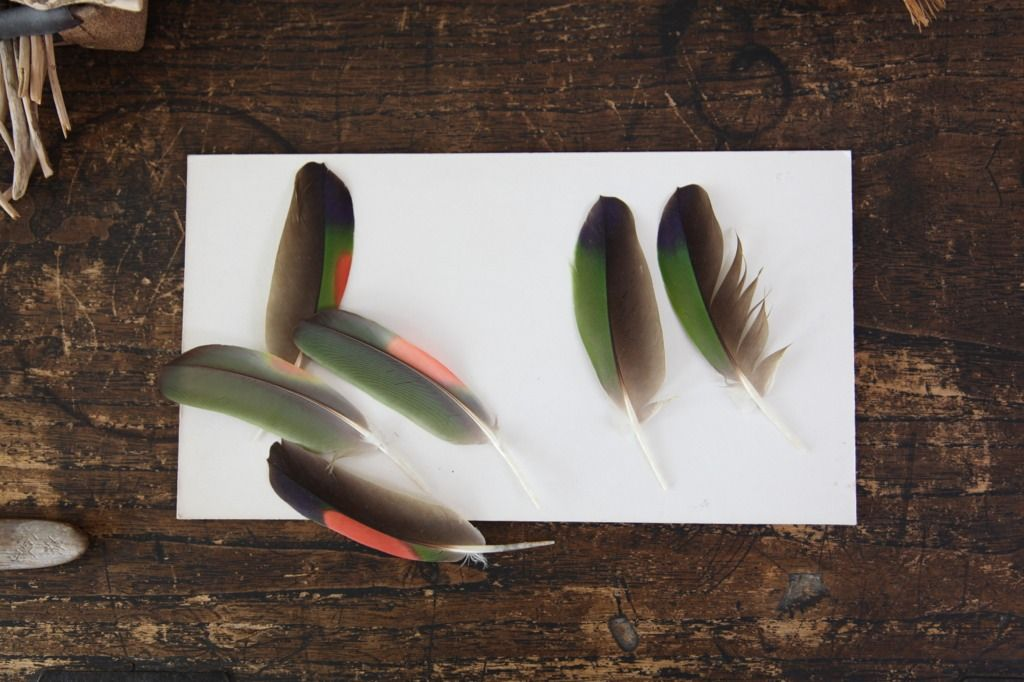 found feathers, Kay Sechimachi studio