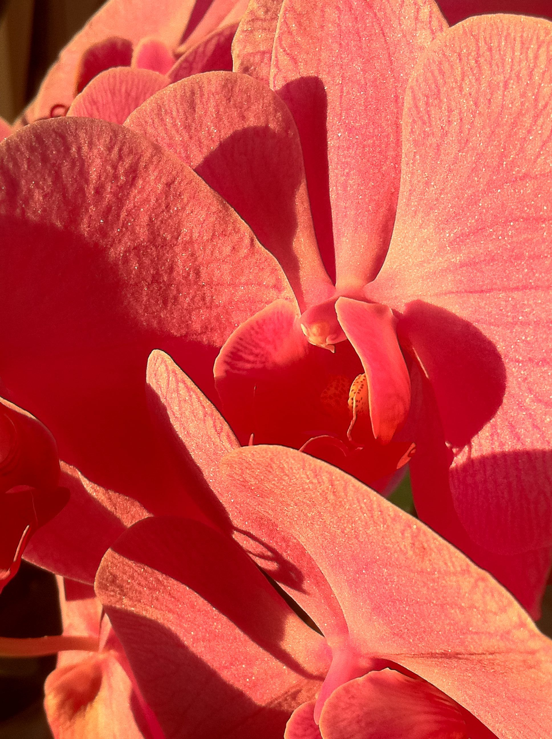 Color Rosa Coral Orchid...   Coral & Pink   Pinterest   Orchid ...
