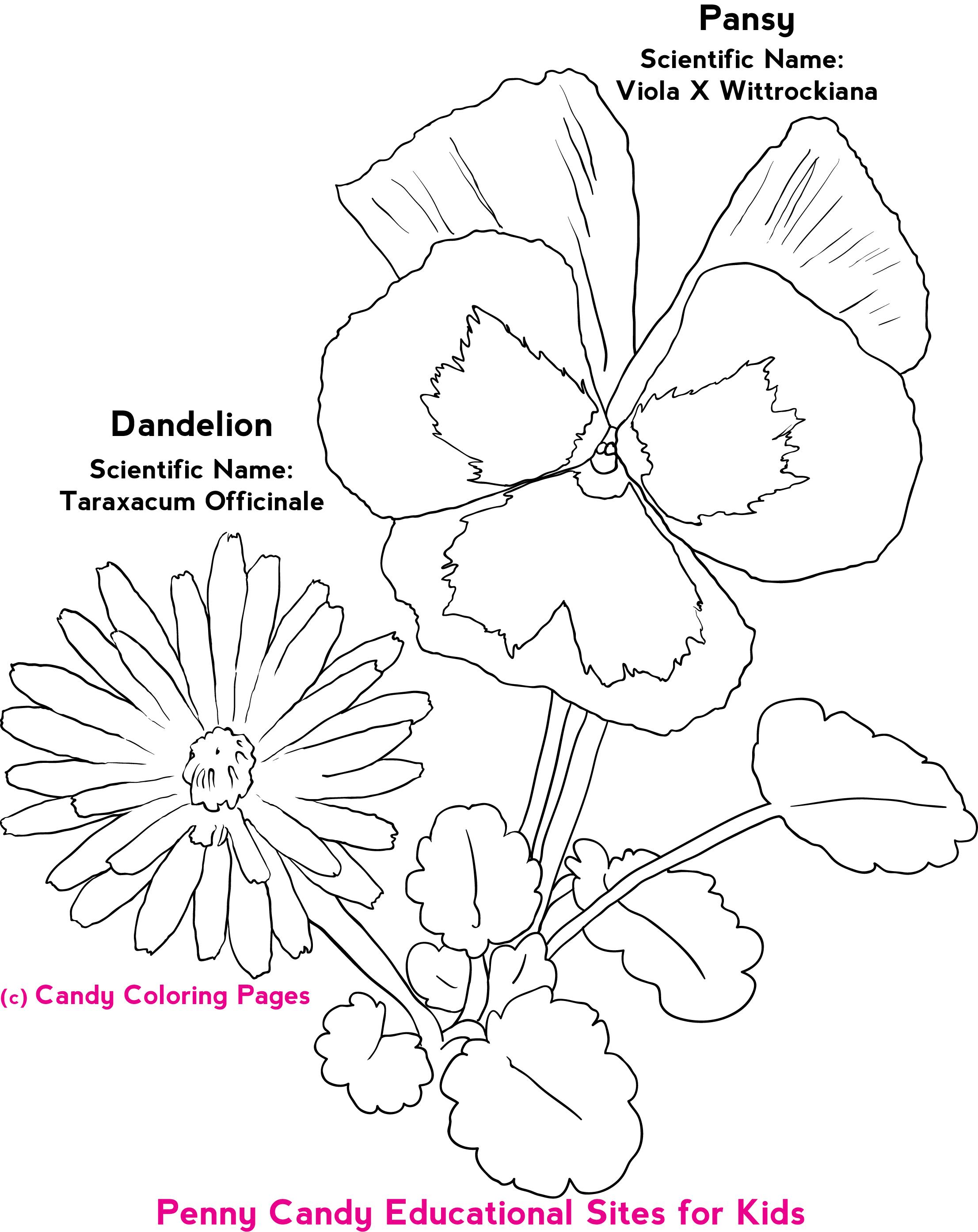 Flowercoloringpagesg flower coloring pinterest