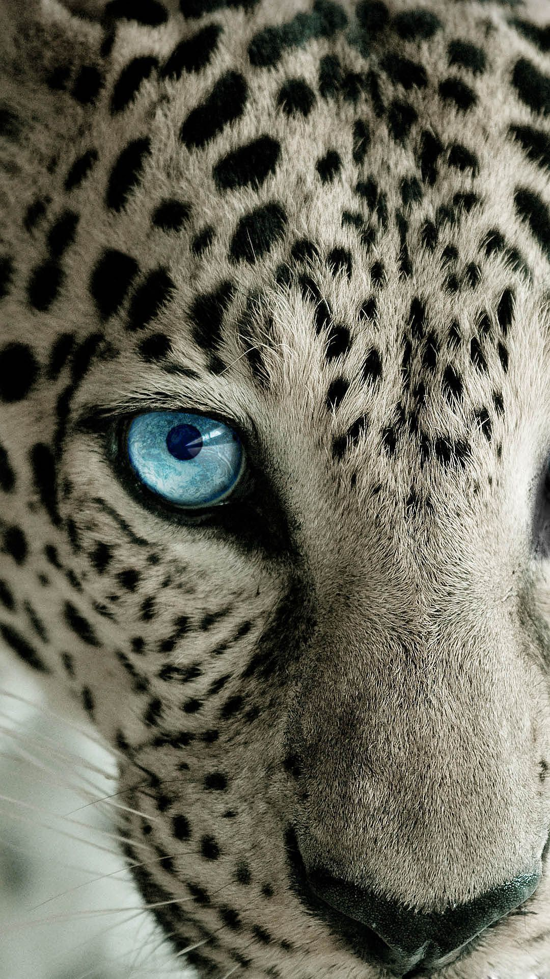 Drawn Wallpaper Snow Leopard