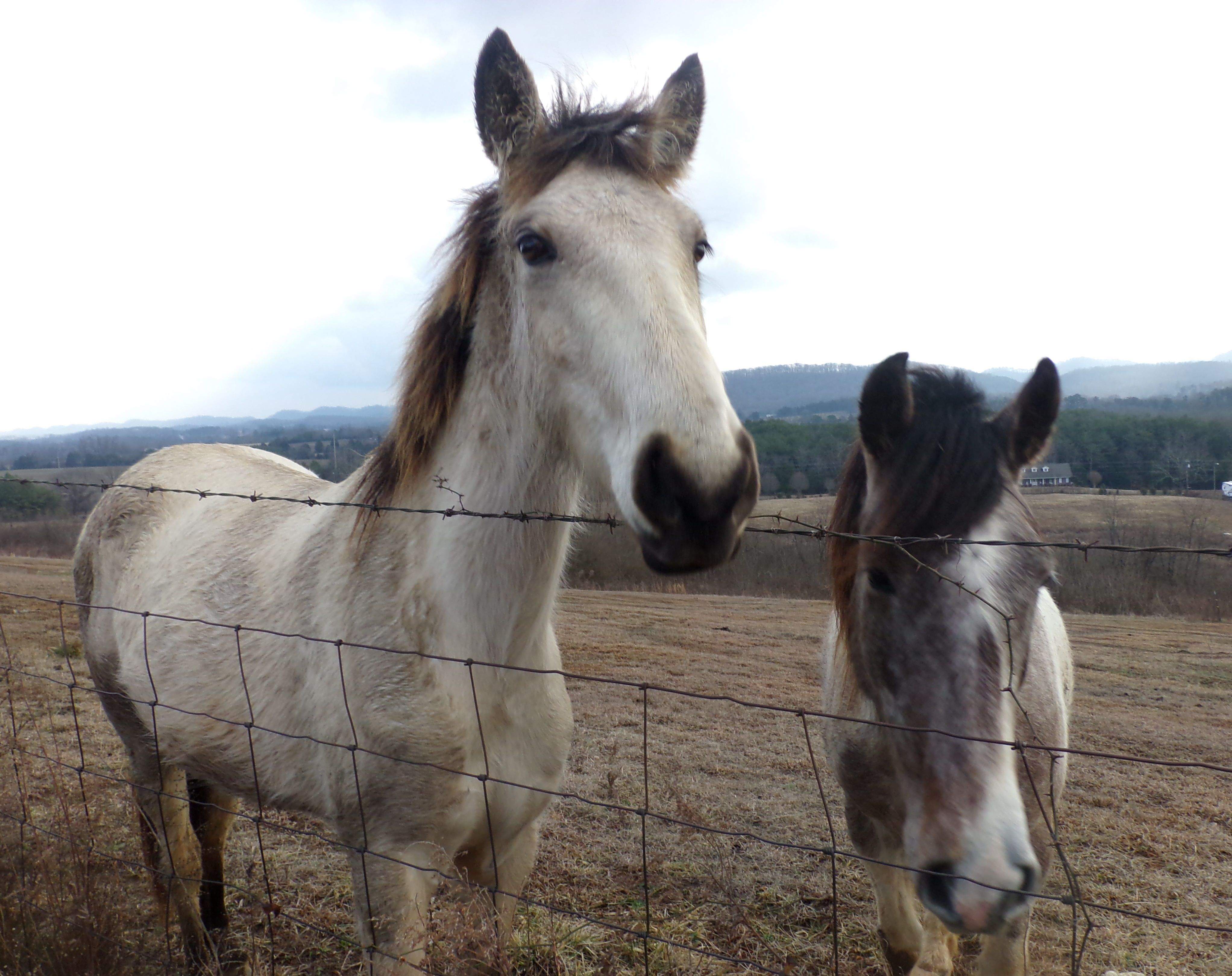 I just had to pull over & #pet these guys! I cant pass up on loving on a #horse! by:ADColeman #horses #animals