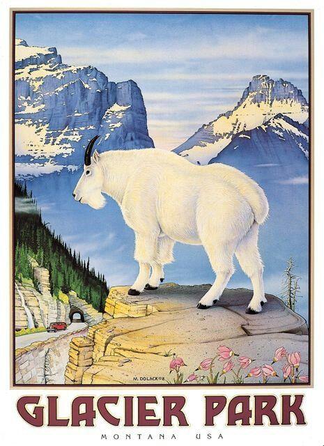 Glacier Park. Montana. Fawn Whisperer