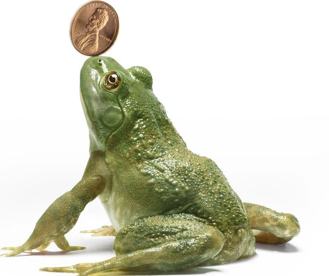 Can You Attract Prosperity And Wealth With A Money Frog Feng Shui