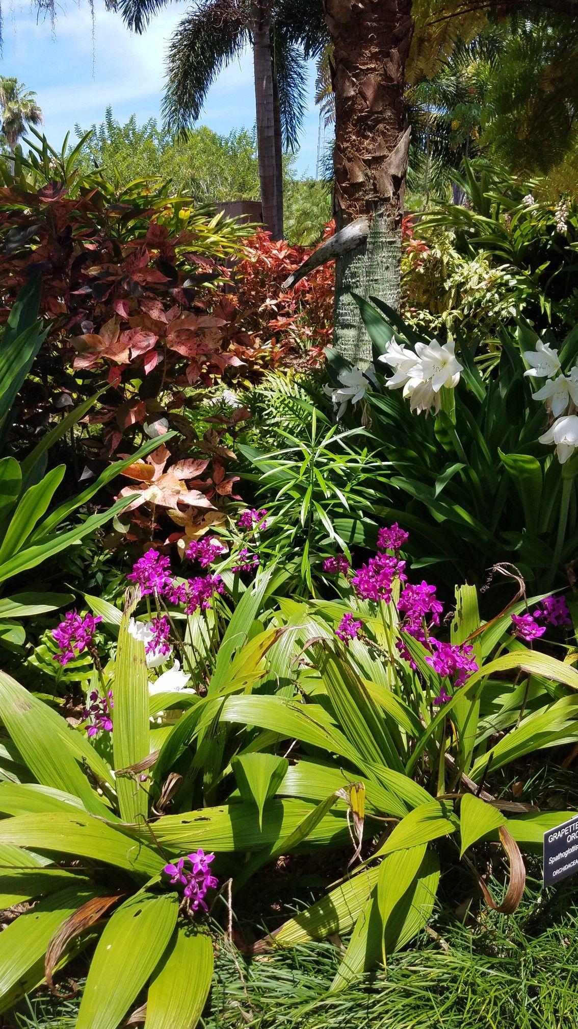 c145e6d098d9d7e8010805a7b35085f7 - The Florida Botanical Gardens In Largo