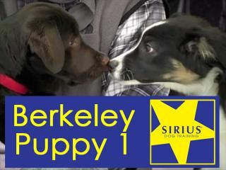 1st Puppy Class 6 Weeks Sirius Dog Training Berkeley Puppy 1