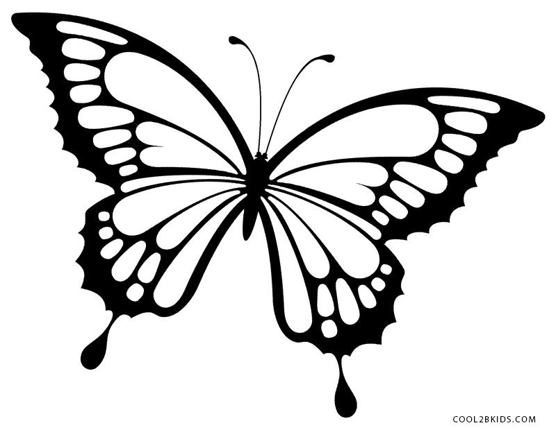 9900 Butterfly Coloring Pages Black And White Pictures