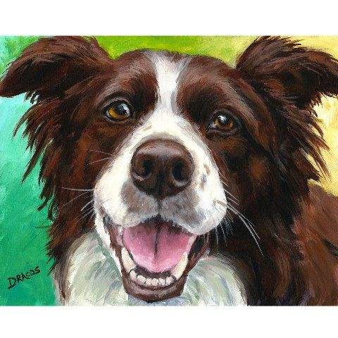 "Border Collie Dog Art 8x10 Print of Original Painting by Dottie Dracos ""Red, Liver, or Chocolate Border Collie Portrait"""