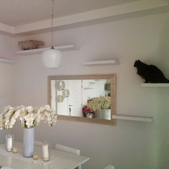 Modern Cat Climbing Shelves