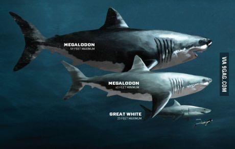 Do You Think Megalodon Still Live Somewhere In The Deep Ocean Megalodon Megalodon Shark Types Of Sharks