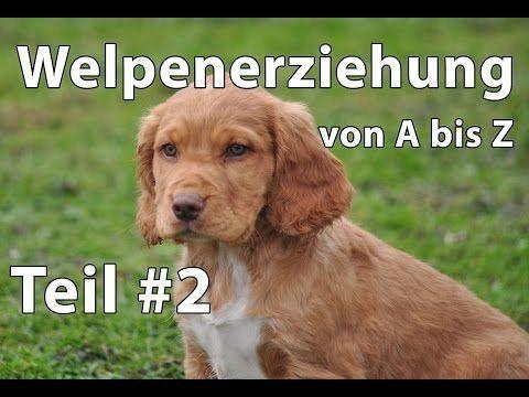 Hier Geht Es Zum Bericht Hund Tipps Ideen In 2020 Hundetrainer Ausbildung Hundetrainer Hunde