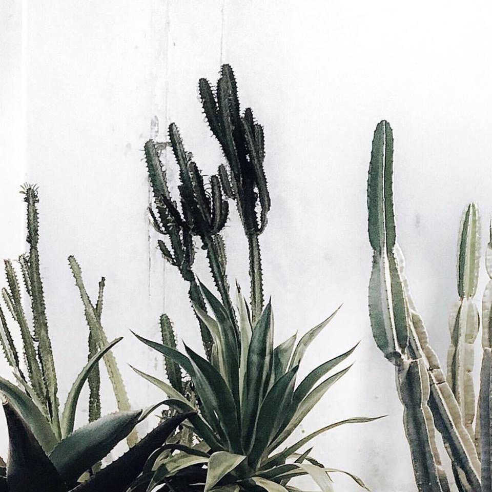 Plantes Plante Verte