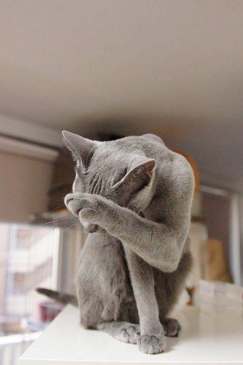 Baju Kucing Murah
