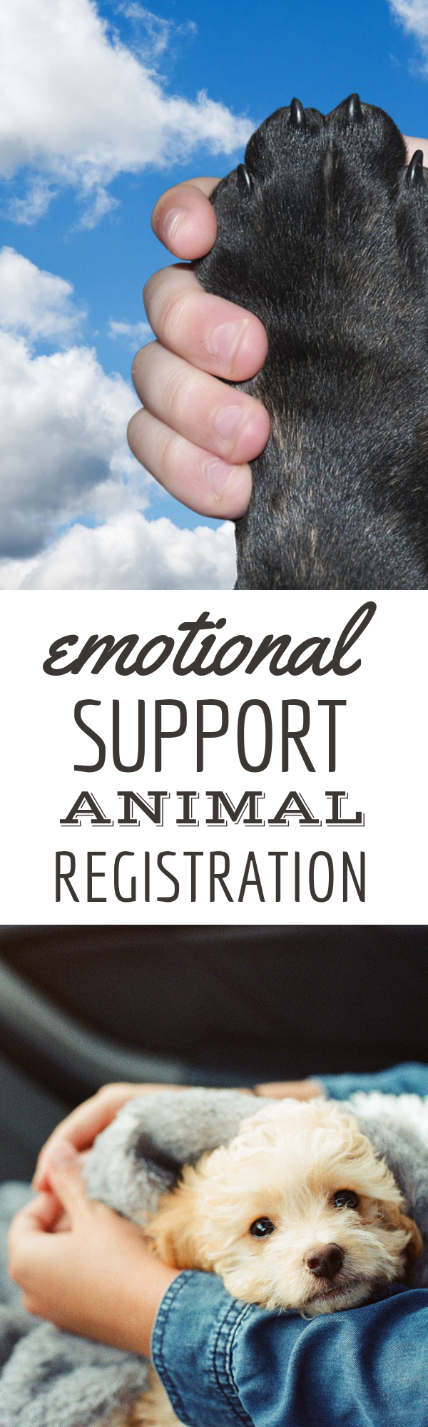 Legitimate Emotional Support Animal Registration