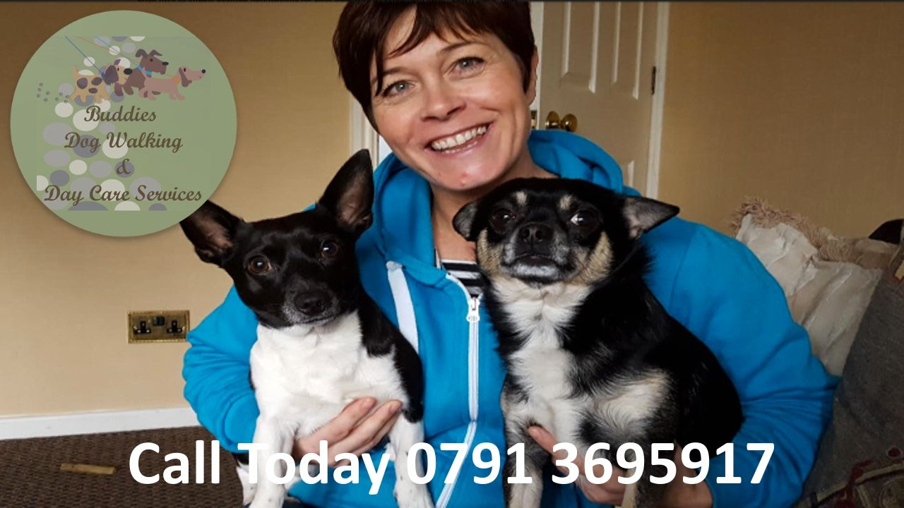 Buddies Dog Walking And Doggy Day Care Services Wakefield