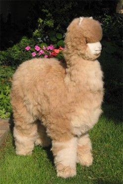 Life Size Alpaca Figure Products I Love Alpaca Stuffed Animal