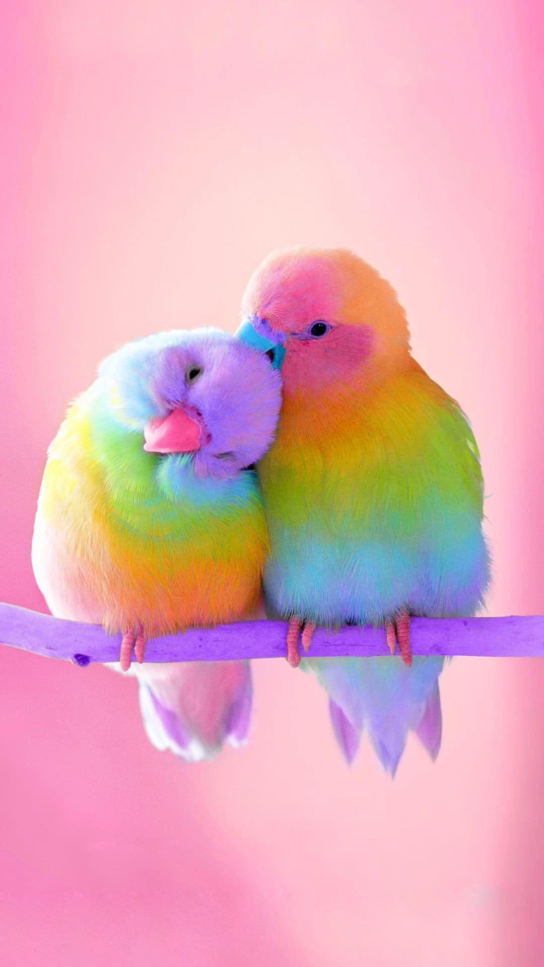 Pink Baby Bird Foil Mylar Balloon  |Pink Baby Birds