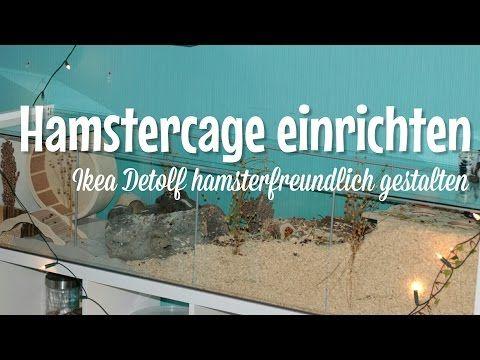 Youtube Hamster Gehege Einrichtung Hamster Gehege Hamster Und