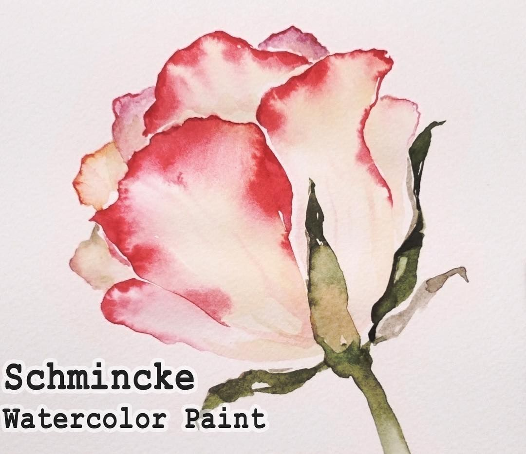 Paint With Schmincke Watercolor Paint Jayartpainting
