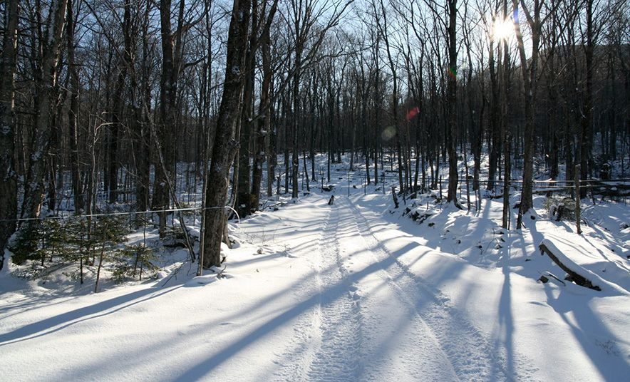 Maple syrup revolution a new discovery could change the
