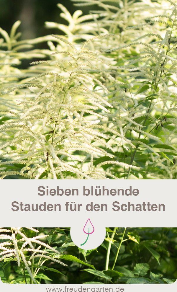 Sieben bl hende winterharte stauden f r den schatten for Pflanzen fur den schatten