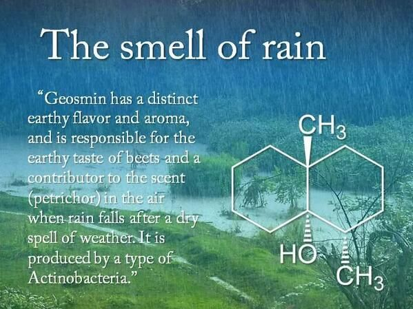 The smell of rain.