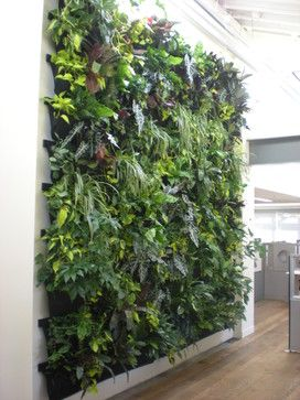 Indoor Vertical Garden / Flora Grubb   Contemporary   Entry   San Francisco    Daniel Nolan