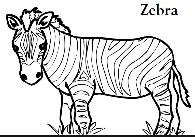 Pin By Classroom Jules On Animal Printable Zebra Coloring Pages Animal Coloring Pages Zebra Pictures