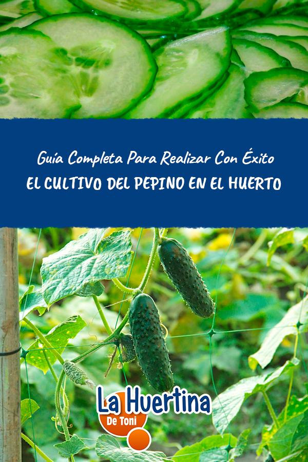 La Huertina De Toni Calendario De Siembra.Guia Completa Del Cultivo Del Pepino En El Huerto La Huertina De
