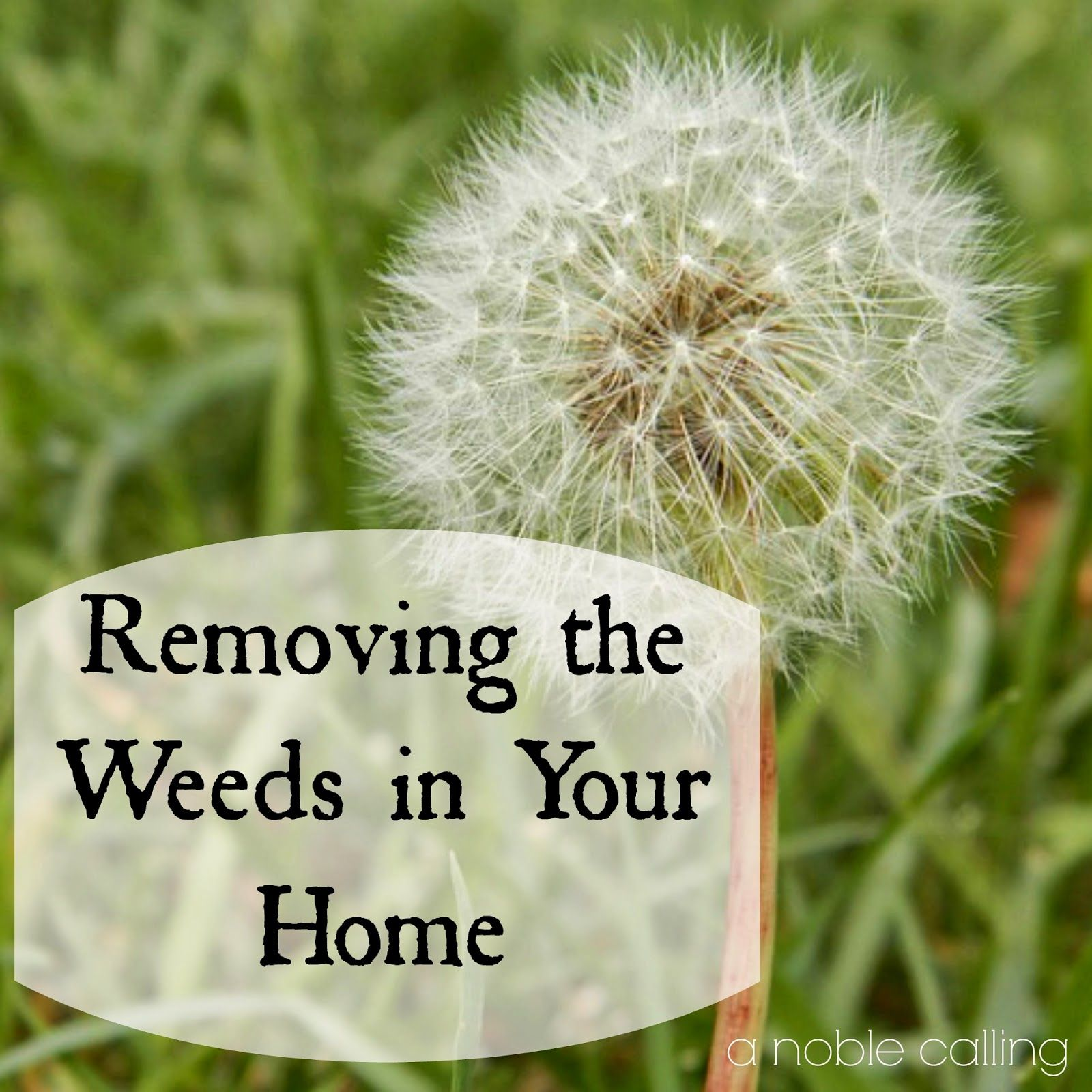 Removing the weeds in your home my husband and i pinterest