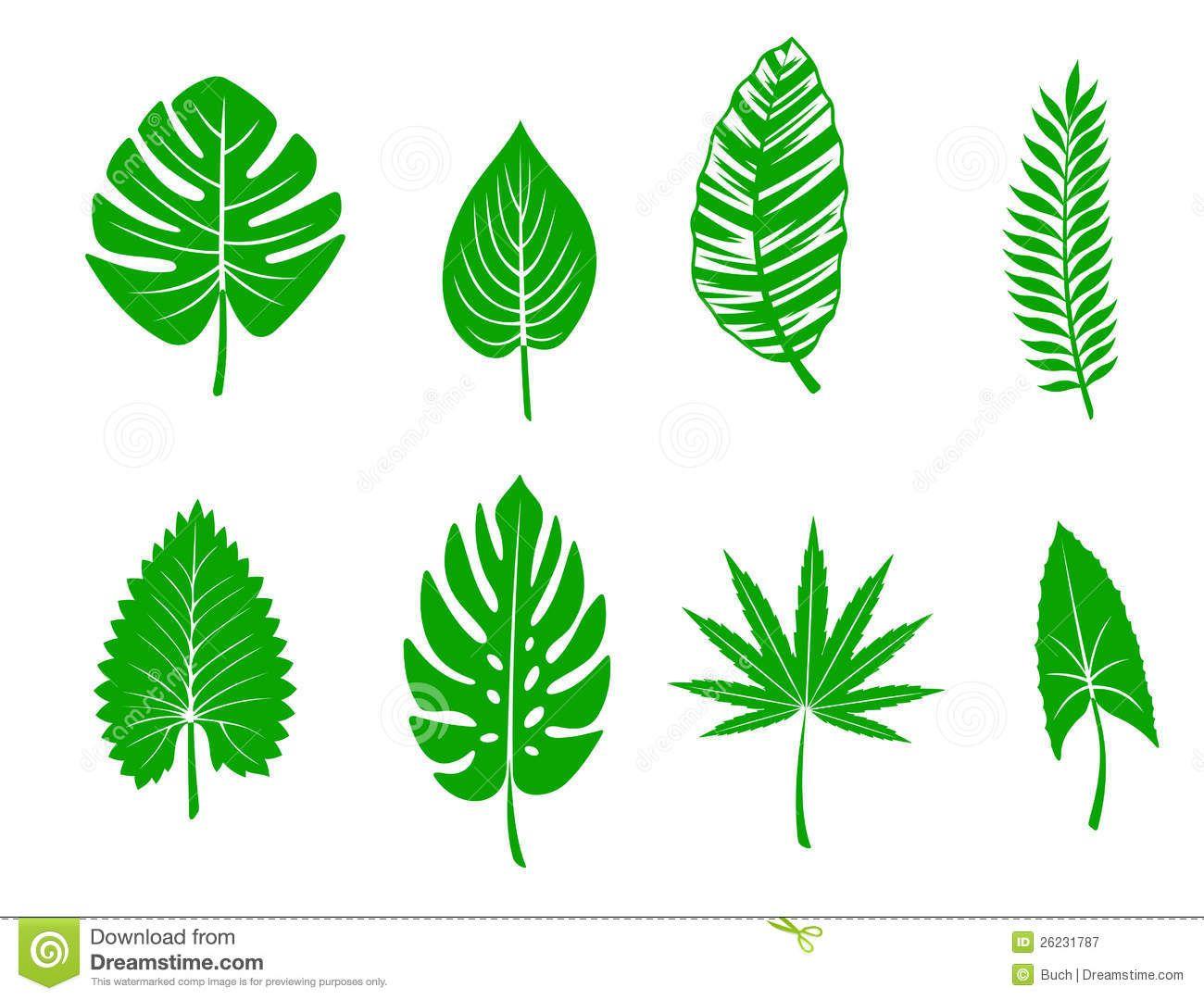 Green Tropical Leaves 26231787 Jpg 1300 1080 Leaf Coloring