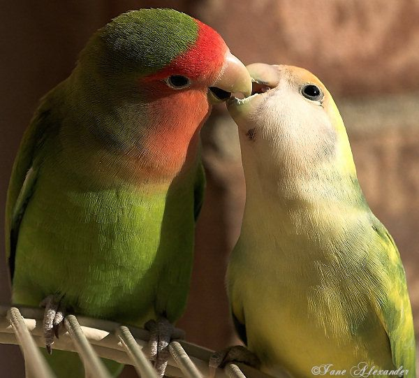 Good Morning Kiss 3 Gifs Buenos Dias Pajaritos Buenos Dias