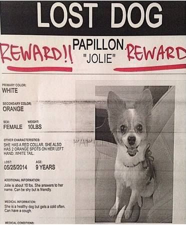 Lost and Found Paws in Los Angeles Metro Area TUJUNGA, CA