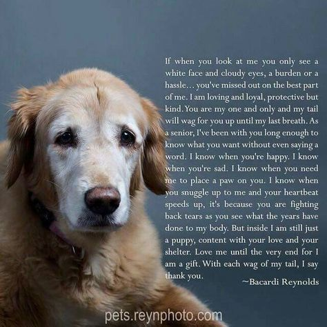Poem From A Senior Dog Sweet Words And So True I M Sure That S