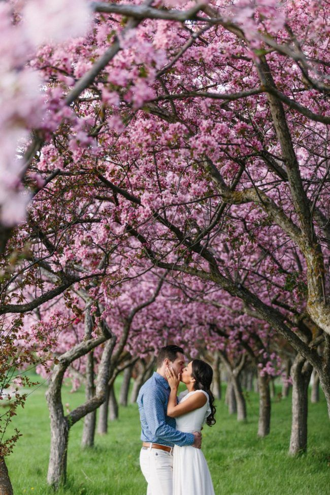 Sweet Apple Blossom Engagement Photographs In Ottawa Grace Gold Studio Wedding Engagement Pictures Engagement Announcement Photos Engagement Photographer