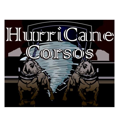 Hurricane Corso Kennels Cane Corso Breeder Located In Florida