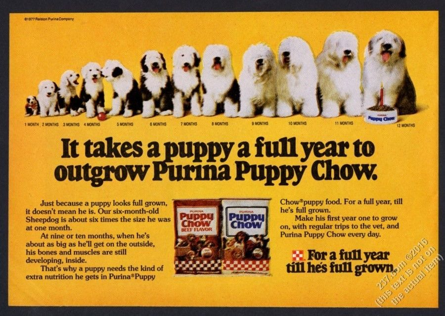1977 Old English Sheepdog 12 Photo Puppy To Adult Purina Puppy