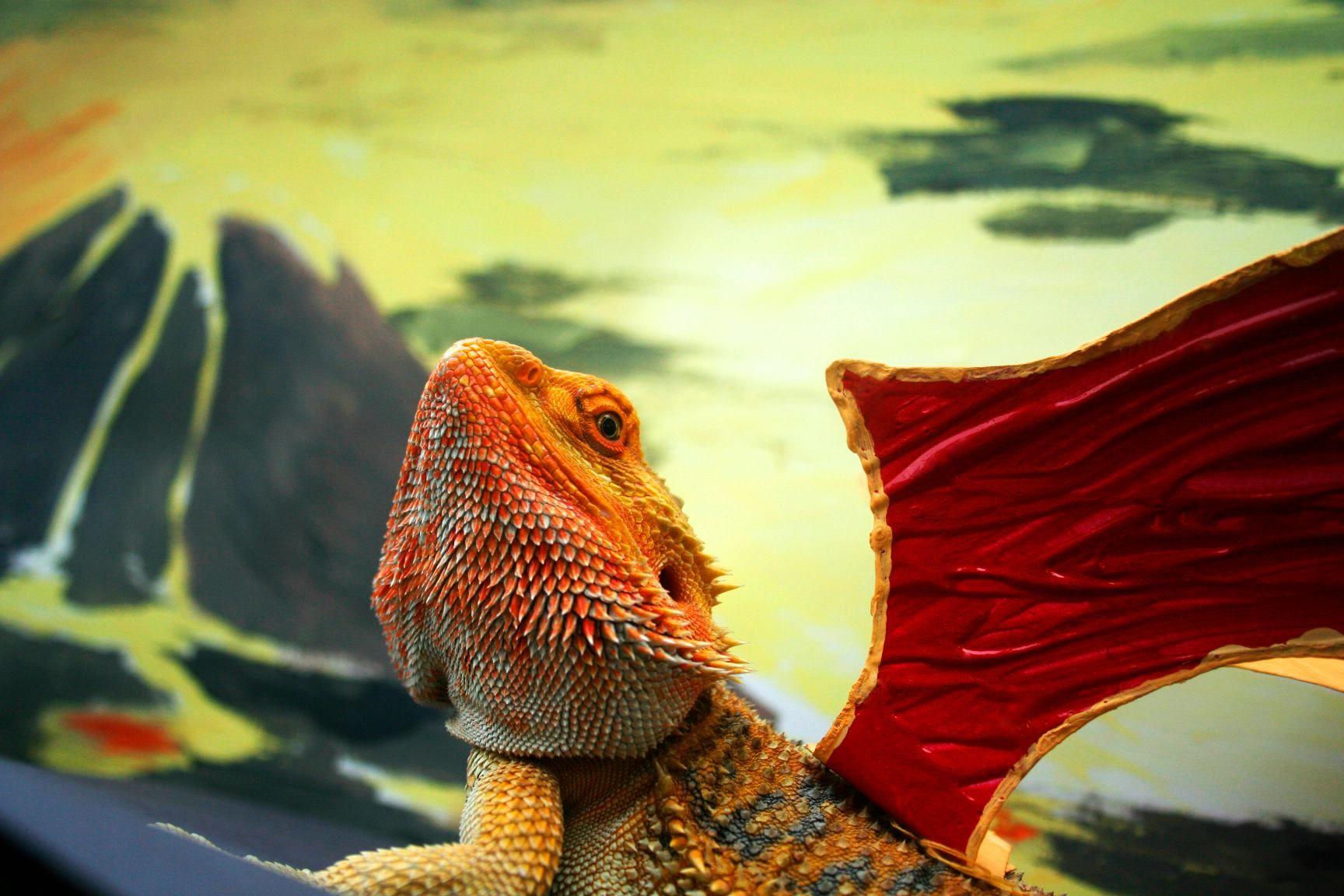 Nobetterdeal S Pets Halloween Costume Contest