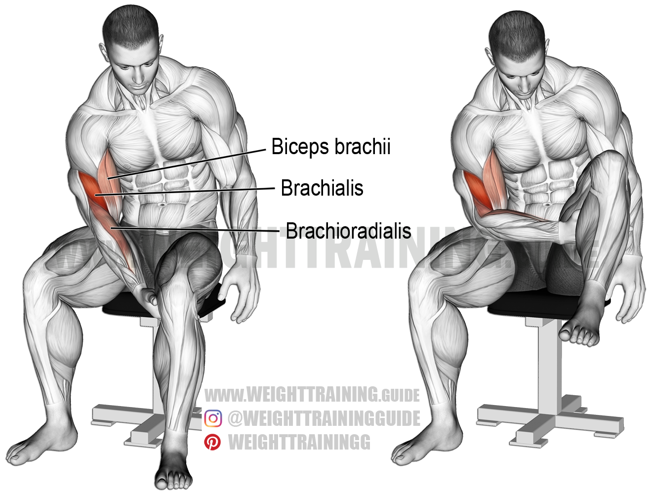Biceps leg curl exercise instructions and video | Curl types, Biceps ...