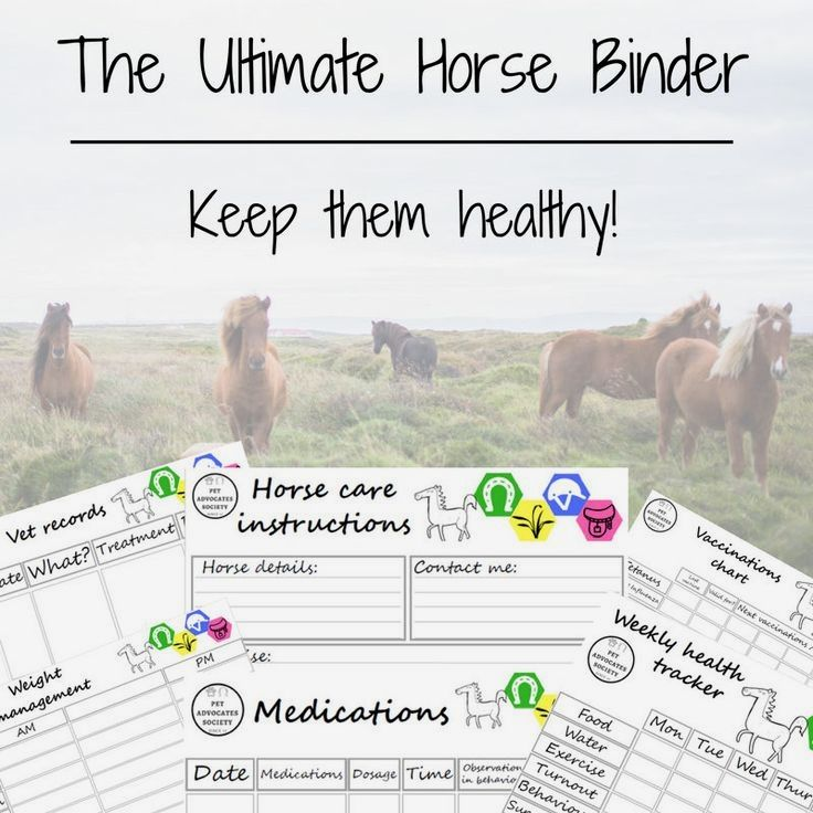 Horse health tips will not keep your horse to stay