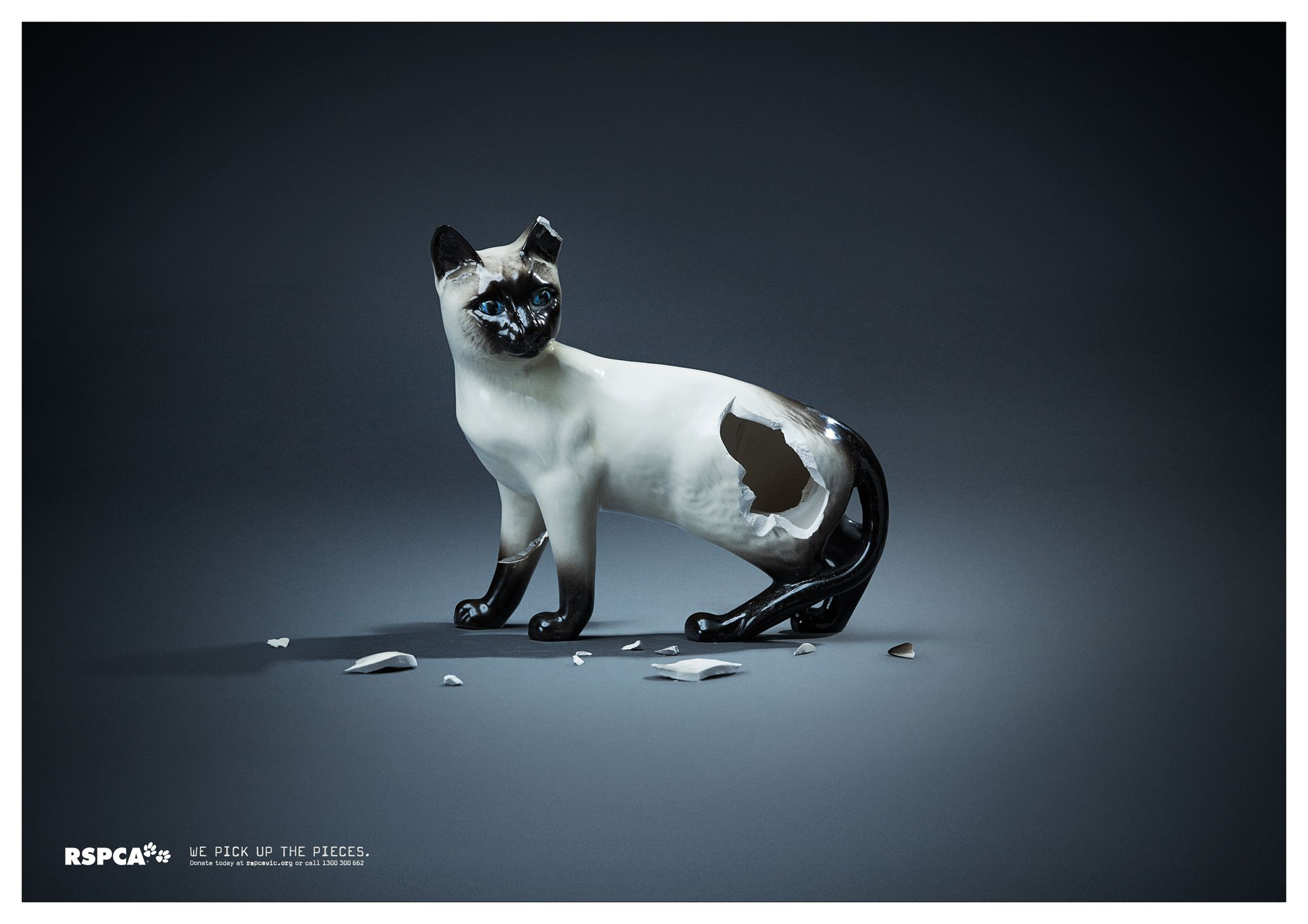 Evocative print ad from the RSPCA cats marketing