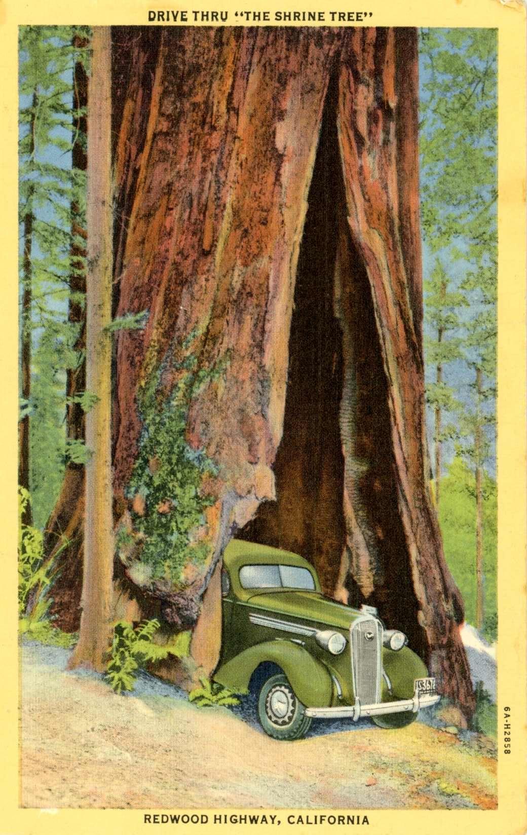 1930's postcard. Hagins collection. Postcard, California