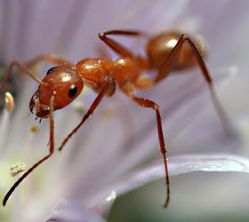 6 Ways To Deal With Ants In The House