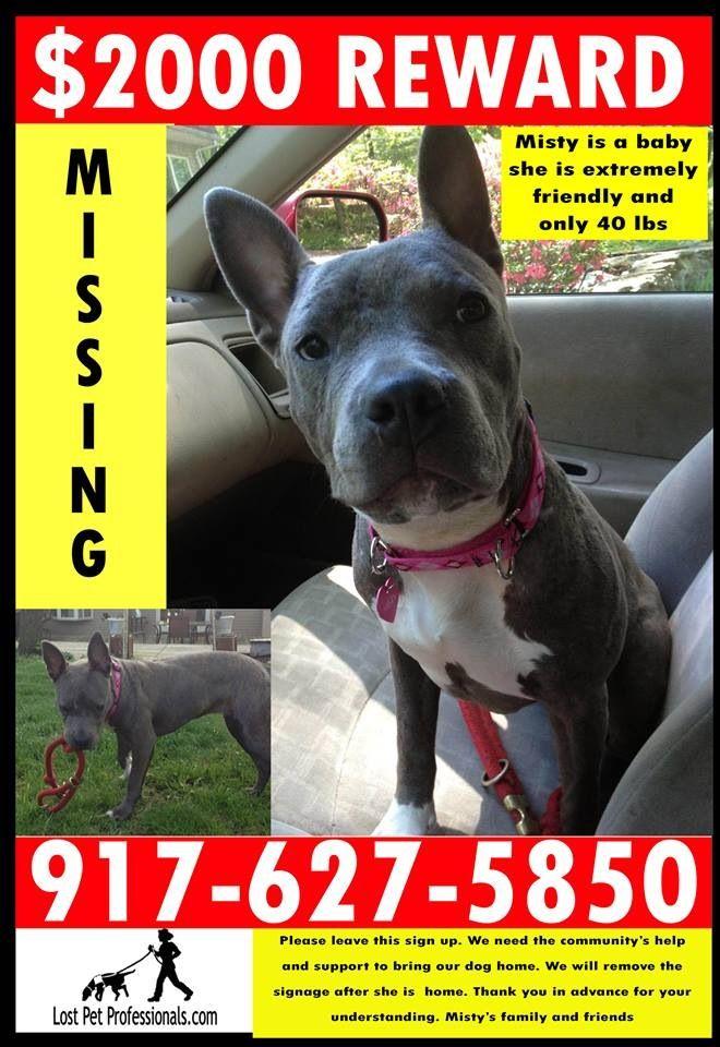 Visit Misty S Journey On Facebook For More Info Losing A Pet Dogs Dog Love