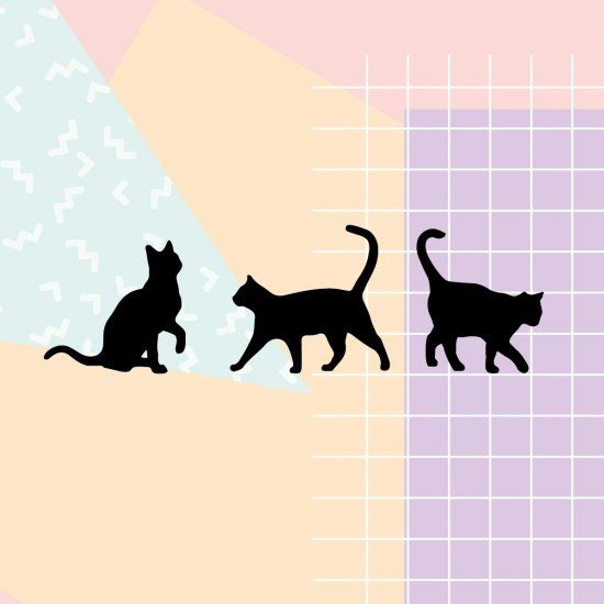 Black cat desktop wallpaper