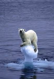 Le Pole Nord Bing Images Polar Bear Animals Wild Animals