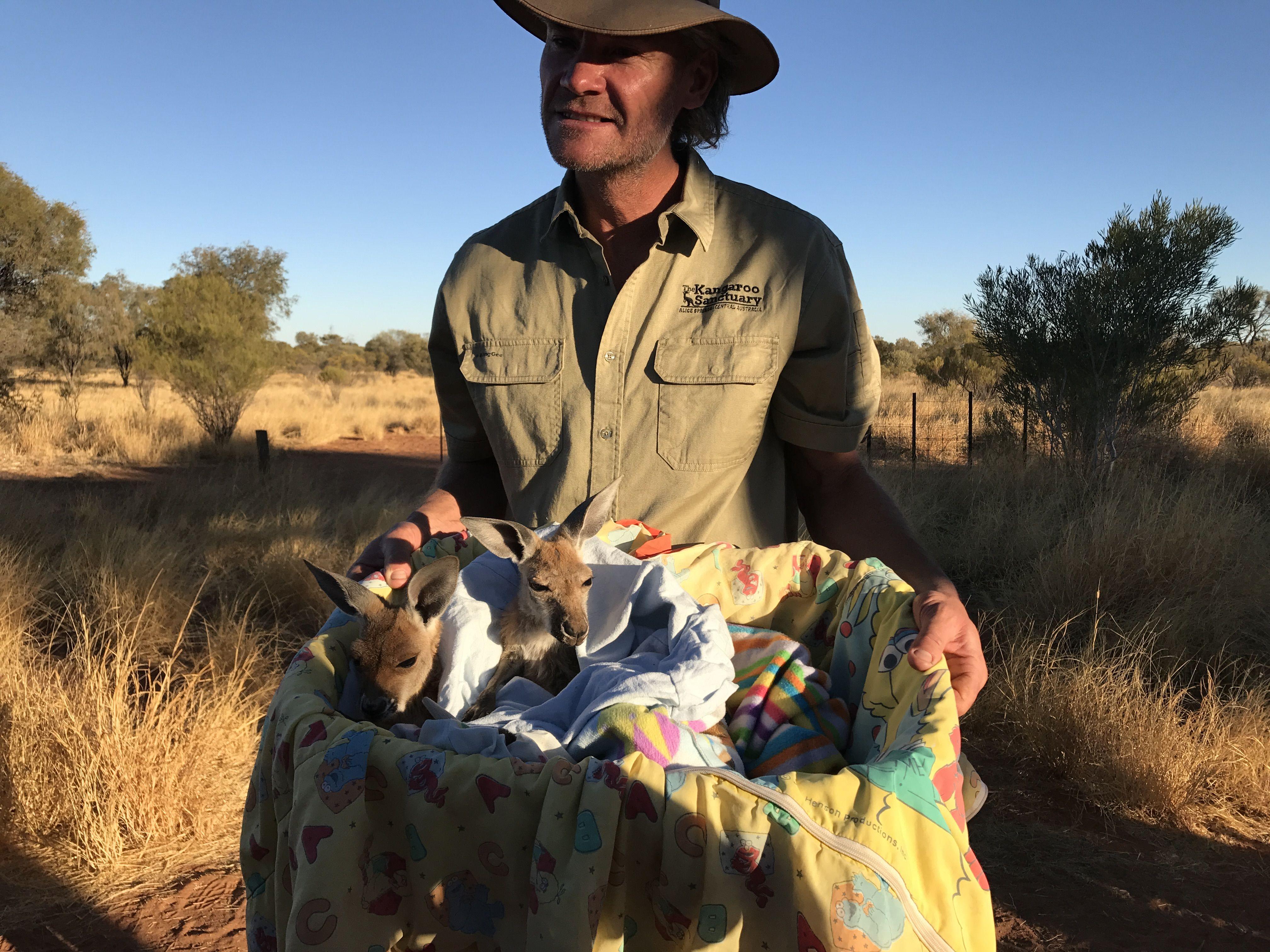 Kangaroo Sanctuary Alice Springs NT Australia Places Spaces - Kangaroo sanctuary alice springs