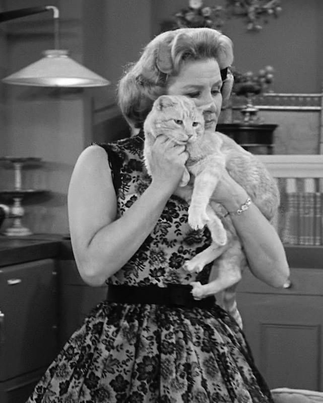 Image result for dick van dyke show and cat  mr henderson