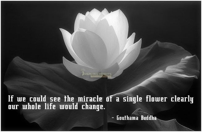 If we could see the miracle of a single flower clearly our whole life would change.