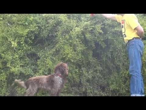 Funny Dog Jumps Into The Bush To Get The Toy Dogs Funny Animal