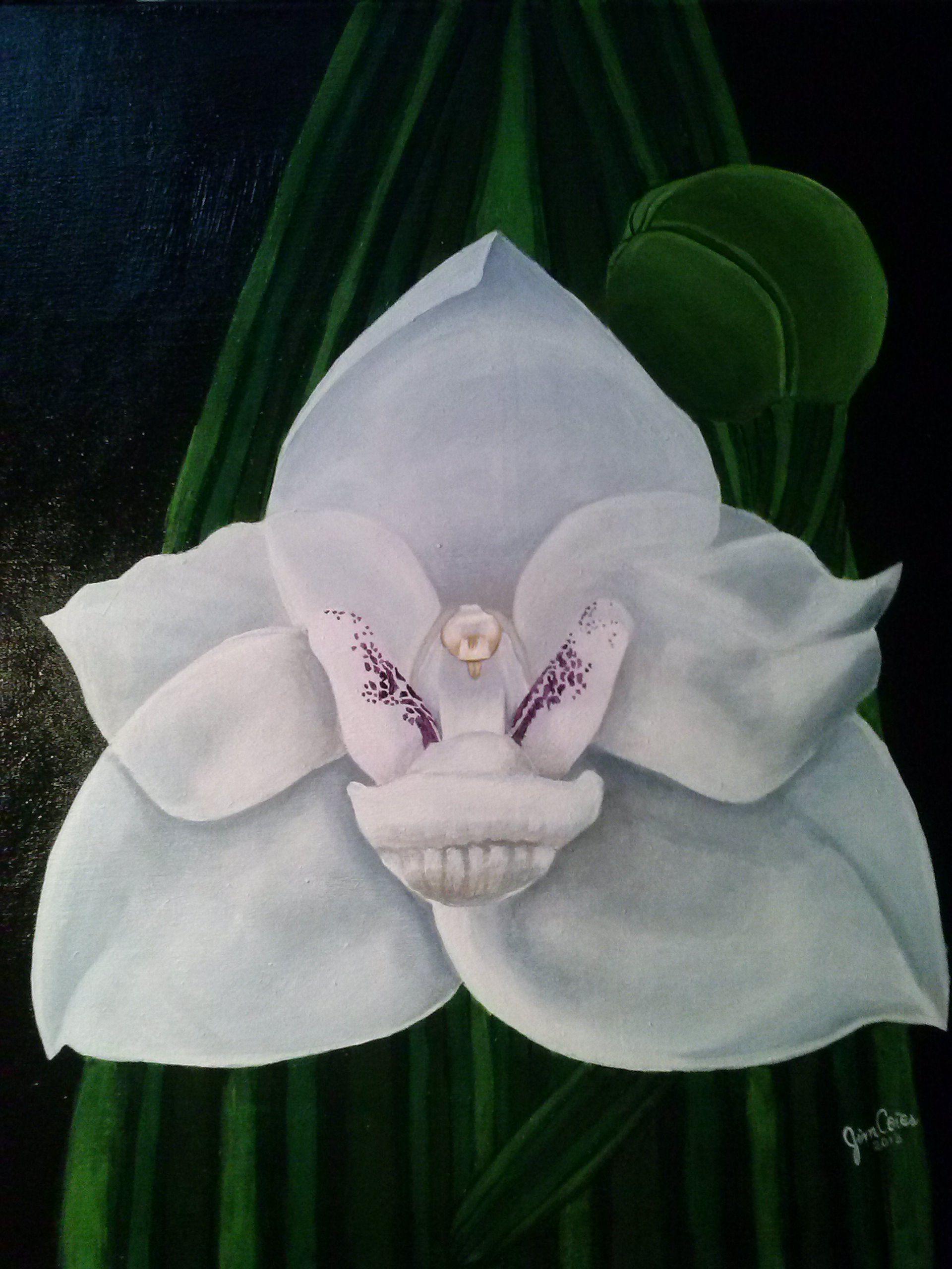 Peristeria Elata Flor Del Espíritu Santo Flor Nacional De Panamá Plantas En Maceta Orquideas Murales
